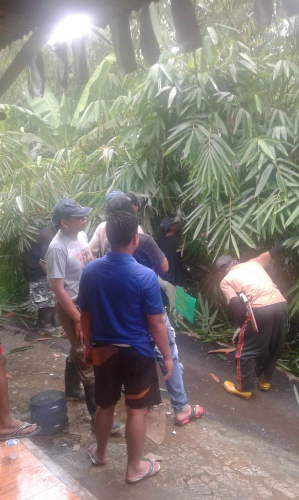 PLN Rayon Cibadak Di Bantu Warga, Tebang Bambu Yang Lintasi Kabel Listrik